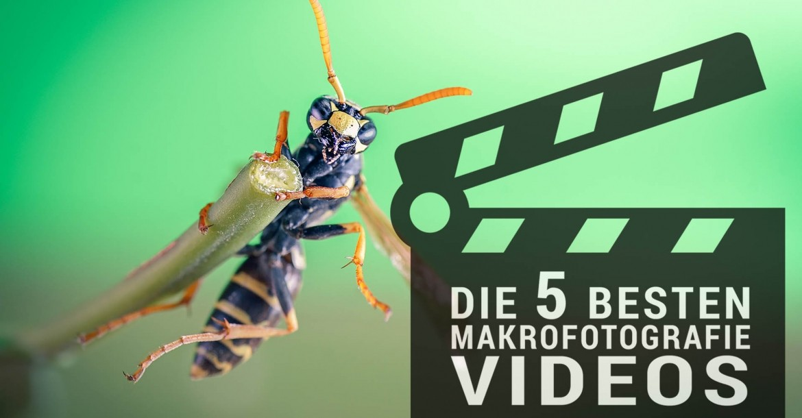 TOP 5 Makrofotografie-Videos