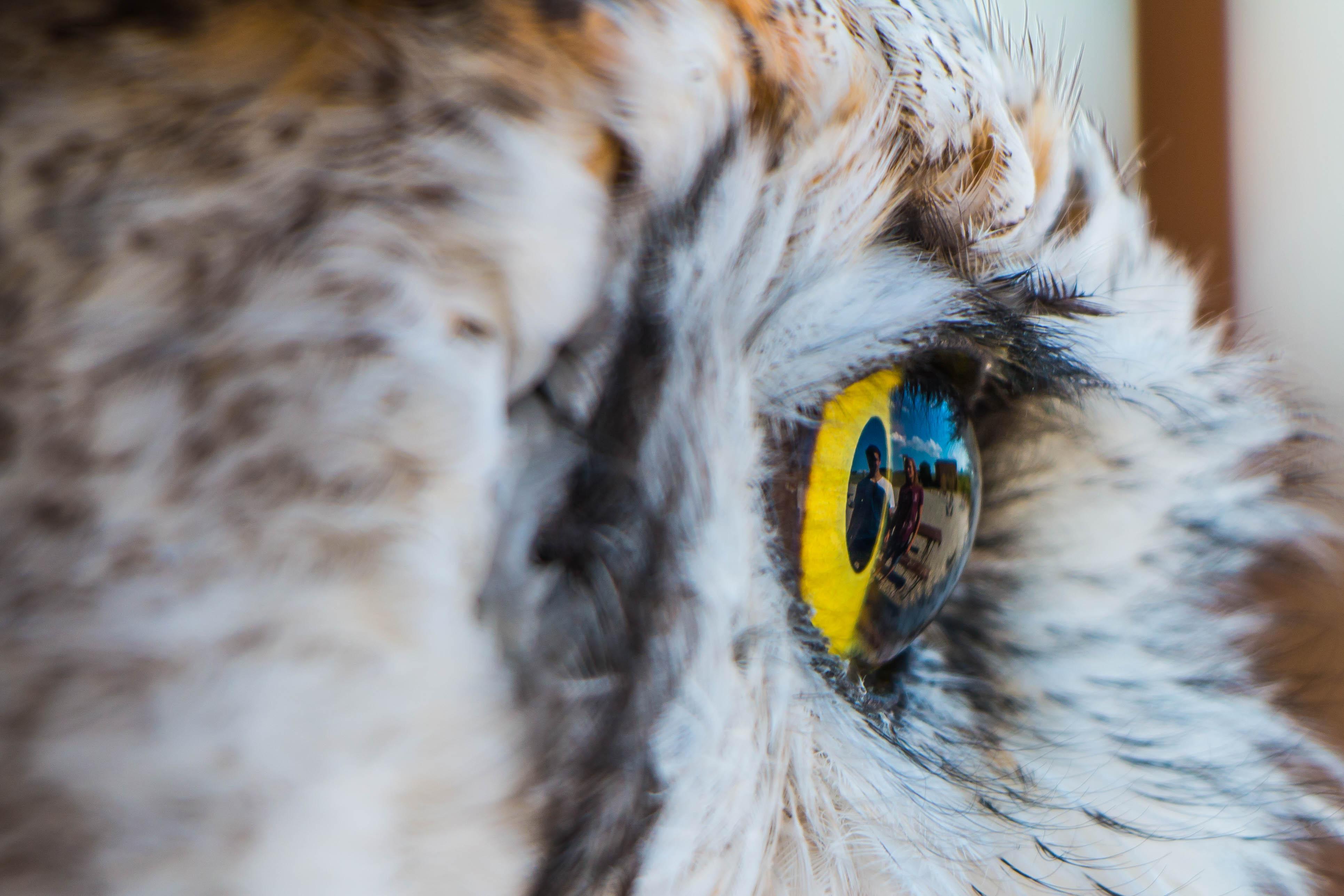 Auge Wie Glaskuppe Mit Spiegel Makrotreff