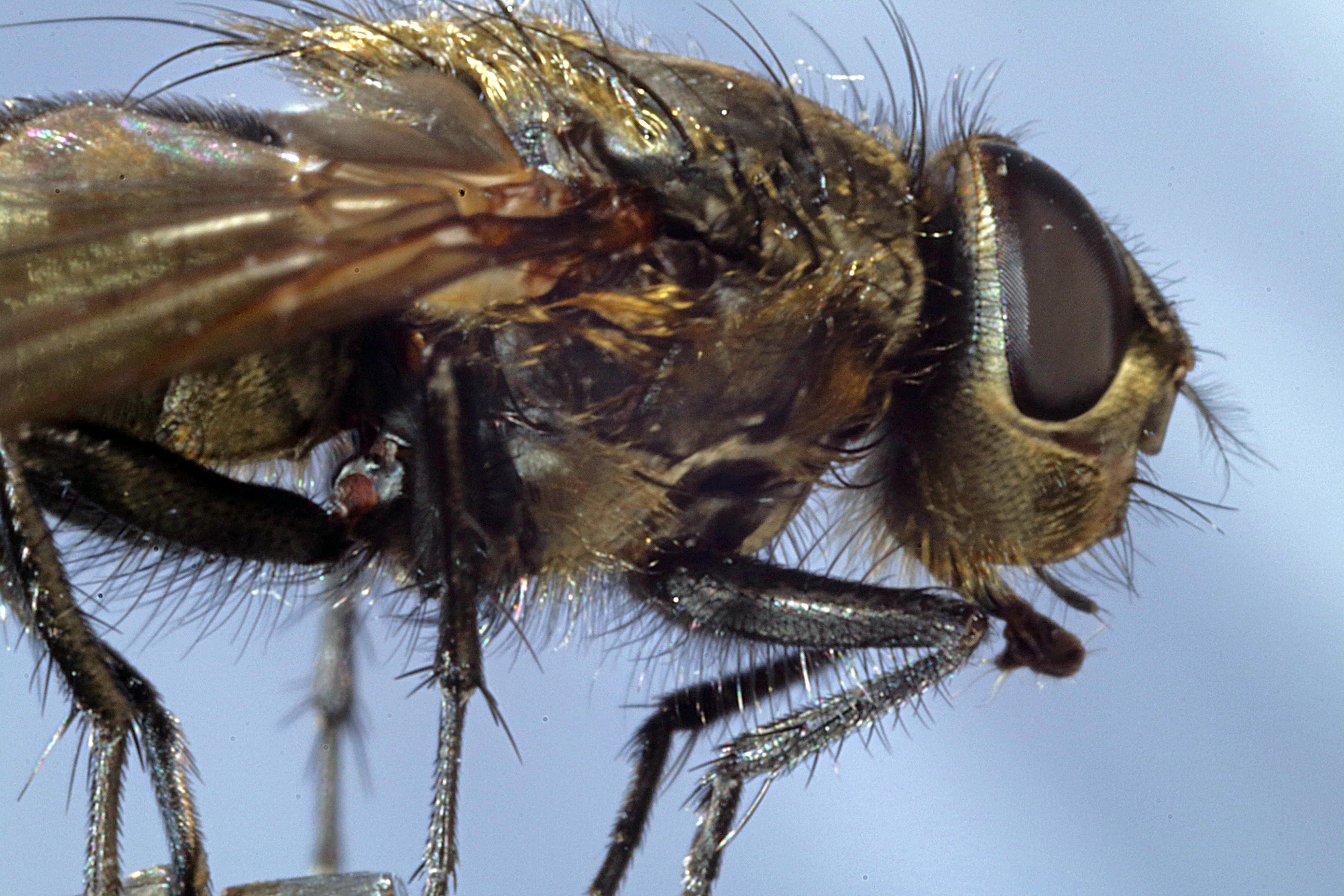 Insekten im Haus