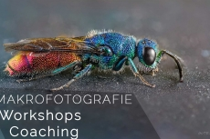 Makrofotografie Workshops und Coaching
