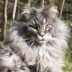 Profile picture for user Mainecoon